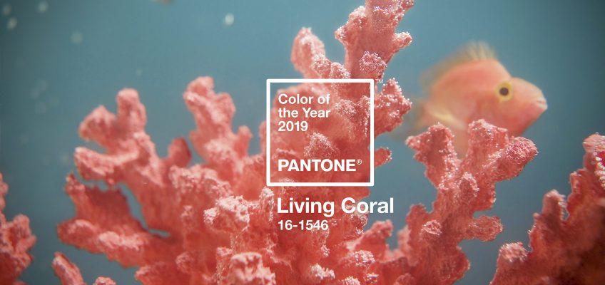 Cam san hô là tông màu thống trị năm 2019