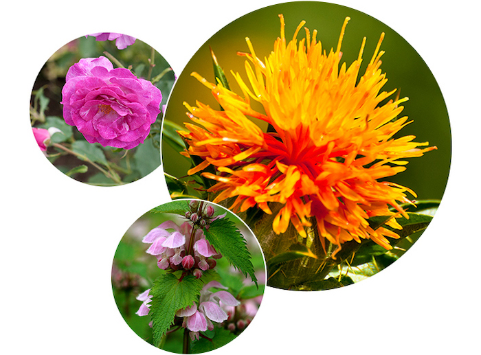 Chiết xuất Hoa Rum, Chiết xuất lá Odorikoso và Nước hoa hồng Bulgari,